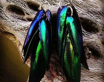 Real Elytra beetle wing cascading dangle earrings sterling silver ear wire size 1