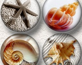 "Seashell Coaster Set of  4 - 3.5 "" Buy 3 SETS Get 1 SET of 4 Free 012C"