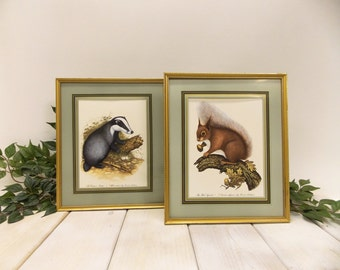 Vintage Pair of Wildlife Prints by David Andrews-- Red Squirrel and Common Badger--Professionally Mounted and Framed