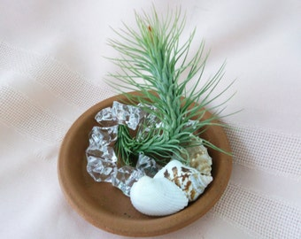 Simply Perfect Clay Saucer Airplant Arrangement