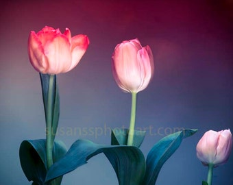 Pink Spring Tulips,  Fine Art Photo, large paper wall art, home decor, office art, colorful abstract, blue and pink art, office art