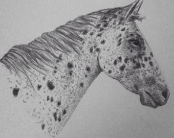 Horse Drawing, Appaloosa, Giclee Print
