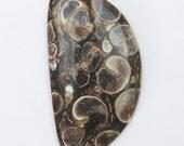 Turritella Agate Fossil Cabochon, free-form shape sea shell gemstone  cbtrt002