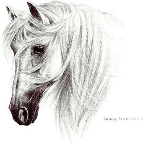 Tranko Andalusian Horse Womans T Shirt 07582HL2 Only 3 Left