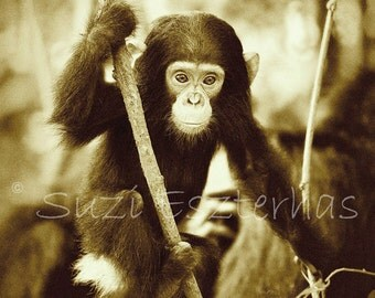 50% OFF SALE, Baby Animal Print, Baby Chimpanzee, Vintage Sepia Photo, Nursery Wall Art, Baby Animal Photography, Chimp, Child Room Decor
