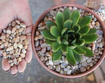 6 pounds  SALMON color POTTING GRAVEL for all  succulent succulents plants of gravel