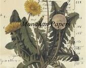 Dandelion - BOT9 - 11x17 Artist Print