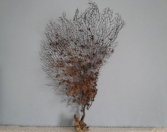 "11"" x 17.2"" Natural Black  Color Gorgonian Sea Fan Fish Tank Seashells Reef Coral"