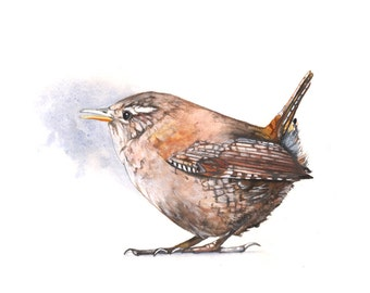 Wren Print of watercolor painting 5 by 7 print wall art print - bird art - art print - wildlife print - W5215 - wren watercolour print