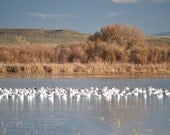 Southwest Lake Birds Photography Print 11x14 Fine Art New Mexico Bosque del Apache Snow Geese Trees Autumn Landscape Photography Print.