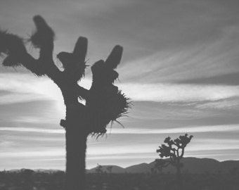 Joshua Tree in black and white, Fine Art Black and White Photography
