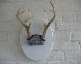 Vintage Deer Antlers - Mounted - 6 Point - Taxidermy - Repurposed - Black And White