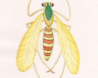 Yellow Damselfly Print. Natural History Insect Specimen Taken From Original Watercolor.  Entomology Drawing of Bugs Moths and Butterflies