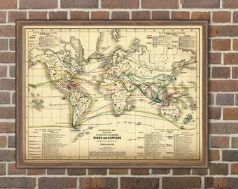 World map for kids - Old zoological map - World map  Illustrated - Birds and Reptiles over the globe - Old atlas -  Kids map