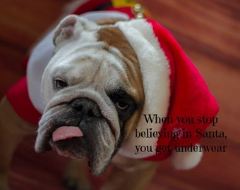 Funny 5 x 7 English Bulldog Christmas Card
