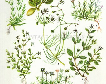 Herbs Vintage Botanical Print Antique, plant print 95 botanical print, bookplate art print, herb plants plant wall print