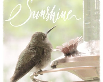 Hummingbird Art Print - Sunshine Quote - Bird Art Print - Bird Feeder - Hummingbird Photography - Square Art - Bird Photo - Nature Art Print