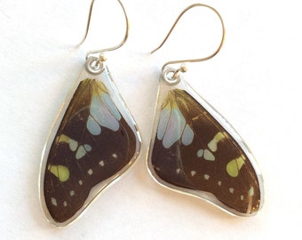 Purple Spotted Swallowtail butterfly earrings ONE OF A KIND (270)