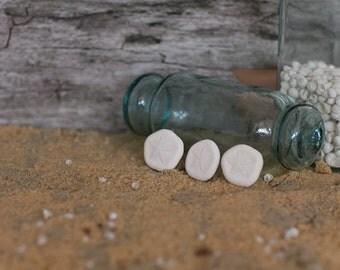 Sea Biscuits Beach Decor Sand Dollars  - 12 pcs.