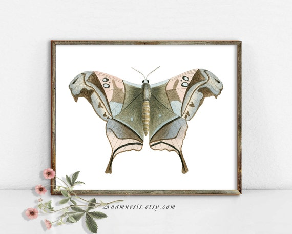 NURSERY MOTH - Instant Download - printable 1800's insect illustration for prints, totes, pillows etc. - nursery art - lovely home decor