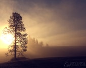 Landscape Photography Oregon | Single Tree | Sunrise | Foggy Morning