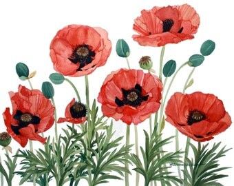 Red Poppy Group from My Garden