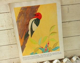 Bird Illustration from 1943 Children's Book Red-Headed Woodpecker and Bluebird