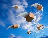 Shipping upgrade/ shipping upgrade