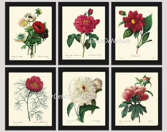 BOTANICAL Print SET of 6 Art Prints 8X10 Redoute Flower White Red Peony Antique Summer Garden Home Wall Room Decor Interior Design to Frame