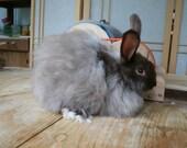 1 oz  Angora Rabbit Fiber...