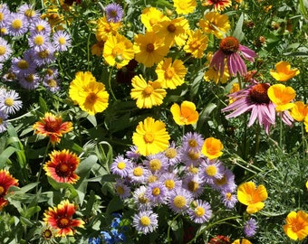 Wildflower Mix, Honey Bee Wildflower Feed Mixture, Pollinator Conservation, Annual and Perennial Mix, 100 Seeds