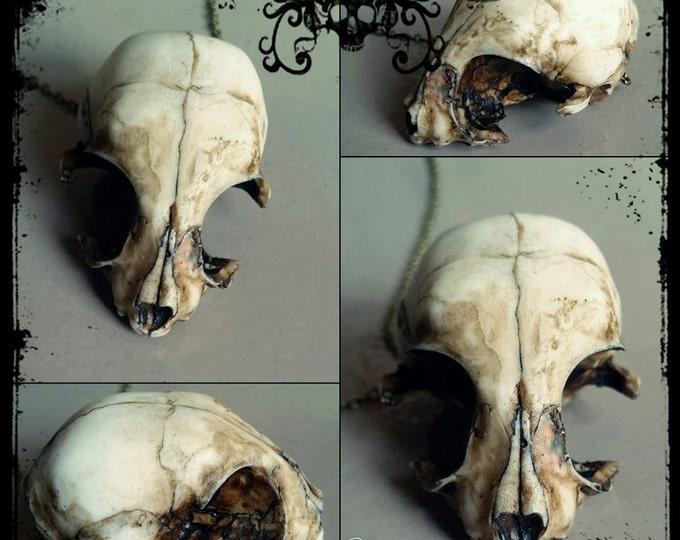 Resin Cast Kitten skull necklace