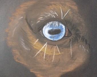 Brown Mustang Horse Face Eye Drawing by Laura Hundsdorfer Original Drawing Pastel Charcoal