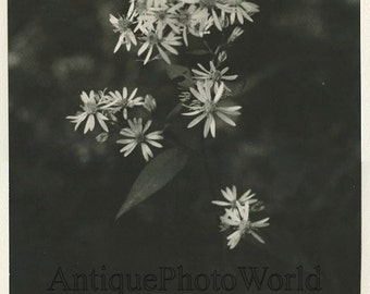 Wild flowers close up vintage art photo