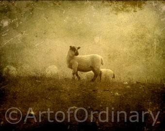 8 x 6 Download,Lamb,Sheep,Lamb In Mist,Misty Image,Lamb Wall Art,Lamb Fine Art,Lamb Room Decor,Lamb Livingroom Decor,Textured Image,
