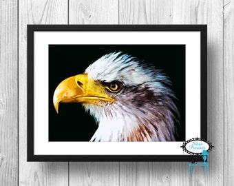 Bald Eagle Illustration Print - 8x10 - Home Decor - Eagle Art - Wall Art - Bird Print - Animal Print - Bald Eagle Print - Eagle Print