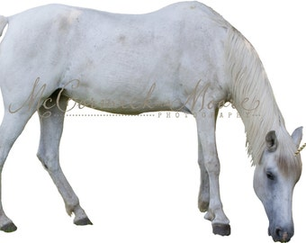 Unicorn Overlay - White Horse - Unicorn Fantasy Magic - Photography Photographer Overlay - Photoshop Overlay - Instant Downlaod