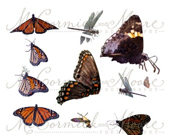 Butterflies & Other Insects Overlay - Photoshop Overlay - Butterfly Dragonfly Bumblebee Bee Moth Overlay Photographer - Photoshop Template