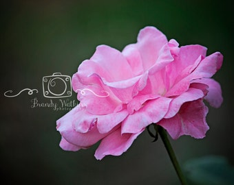 Pink rose print, flower photography, wall art, fine art photography, wall decor, housewarming gift, gift for baby, baby girl nursery