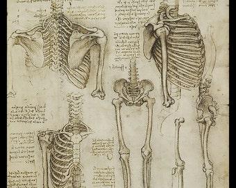 Anatomy - Human Skeletal Structure - Upper Ribcage - vintage image by LeoNardo DaVinci