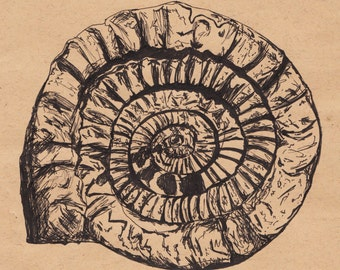 Historical Fossil Pen Illustration Print 5x7