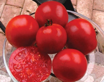 Organic Rutgers Tomato Seeds ~Mycorrhizae Inoculated/Bulk Available~