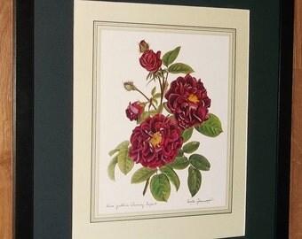 Rosa Gallica, Tuscany Superb - Leslie Greenwood, 20''x16'' frame,rare botanical