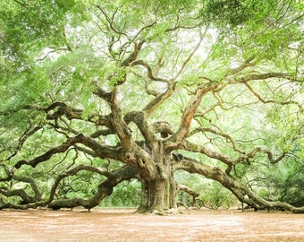 "Charleston Art, Low Country, Live Oaks, Angel Oak, Fine Art Print, Nature Photography, Tree Art, Green Wall, Spa Decor - ""Angel Oak"""