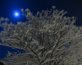 Moonlight Snow (12) - Digital Photo for Download - A Snow scene on a Beautiful Moonlight night - Jerusalem mountains. Nature Scene photo