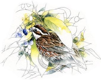 Northern Bobwhite - bird art, wildlife art - nature print of original artwork