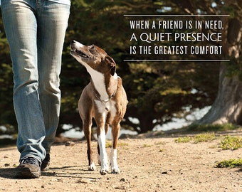 Lessons From the Water Bowl - Volume 1 - Prints - Quiet Presence