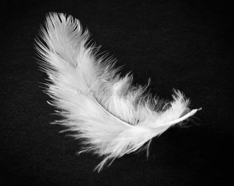 Feather Photograohy, Feathers, Wall Art, Home Decor, Office Decor, Still Life