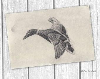 """Original illustration """"flying duck"""""""
