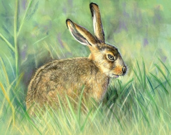 Hare - Limited Edition Mounted A3 portrait artist print of a beautiful Hare